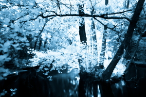 Infrared Tree , La Marne river, Val de Marne, France